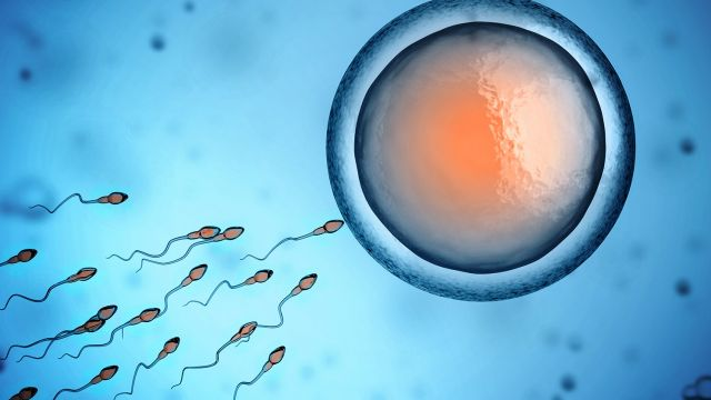 Miracle Conception Preconception Hormonal Processes Leading Pregnancy Hurdles Sperm Fertilize