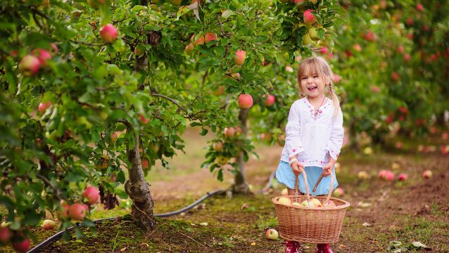 15 places to go apple picking